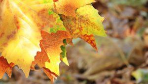autumn-1638480_1920